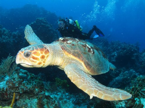 Cozumel certified diving cruise excursions.