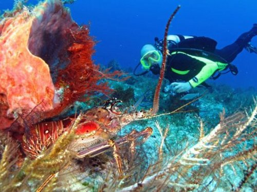 Cozumel certified diving shore excursions.