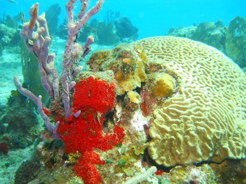 Cozumel coral formations Trip Reviews