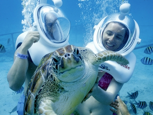 Cozumel marine life Cruise Excursion Reviews