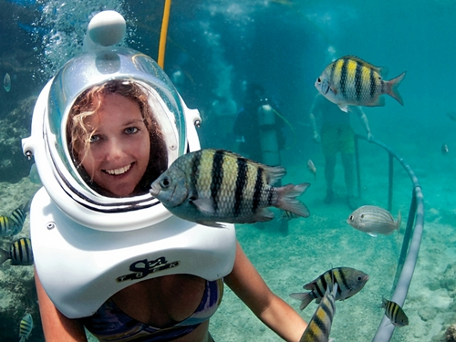 Cozumel marine life Cruise Excursion Tickets