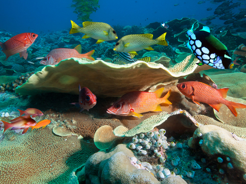Cozumel marine life Excursion Reservations