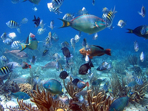 Cozumel Mexico excellent snorkeling Cruise Excursion Reservations
