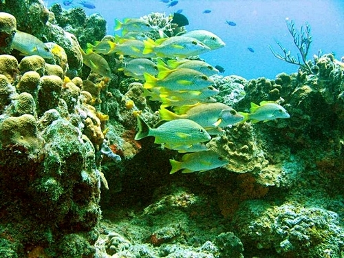 Cozumel Mexico glass bottom boat Excursion Prices