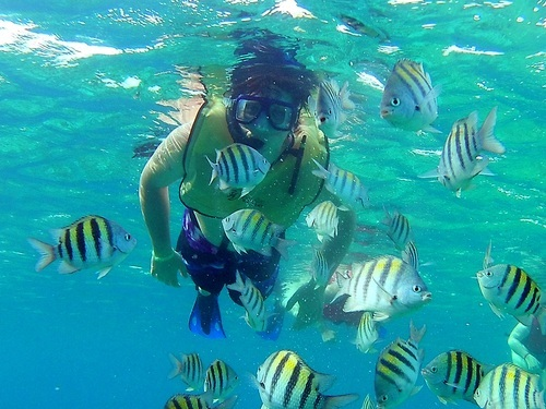 Cozumel Mexico guided snorkeling Cruise Excursion Cost