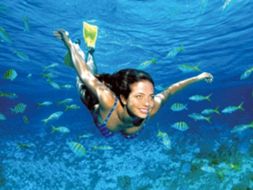Cozumel Mexico tropical fish and colorful coral Shore Excursion Reviews