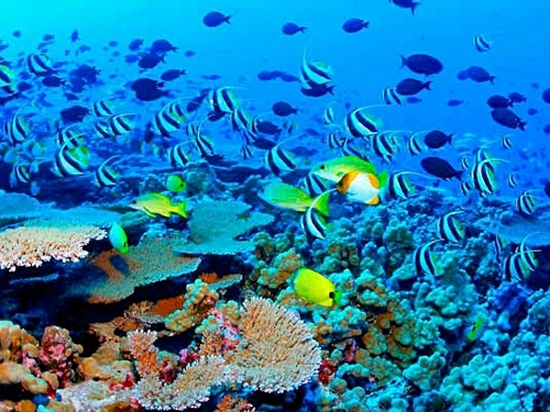 Cozumel Mexico tropical fish and colorful coral Trip Reservations