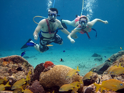 Cozumel Mexico tropical fish Excursion Booking