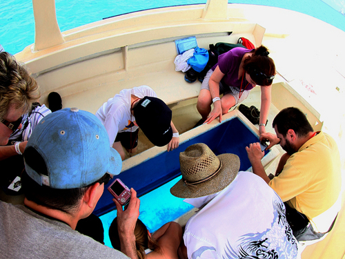 Cozumel scavenger hunt Trip Tickets