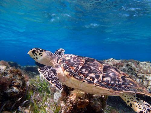 Cozumel tropical fish Trip Tickets