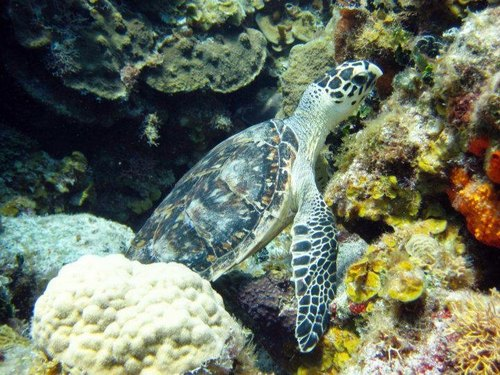 Cozumel two snorkel stops Excursion Cost