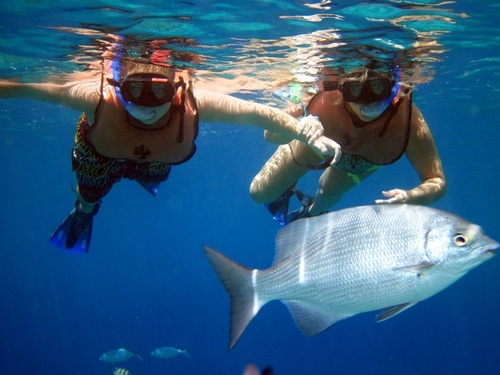 Cozumel unlimited snorkeling Shore Excursion Reservations