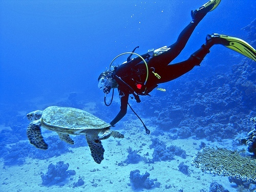 Diving for cruise passengers in Cozumel.