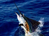Private Deep Sea Fishing Yacht Charter