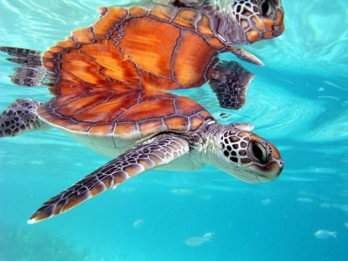 Cozumel Mexico fish and snorkel charter Trip Booking