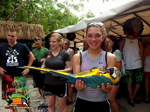 cozumel jade caverns xrail excursions in the jungle